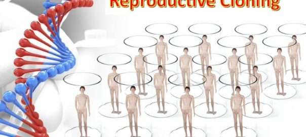 Reproductive Cloning